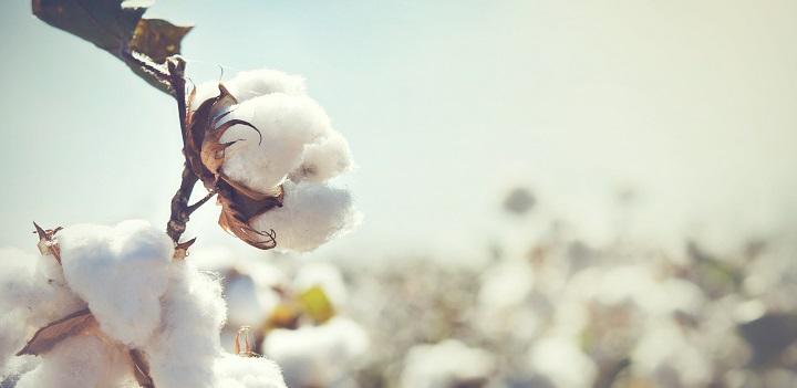 Futon aus Baumwolle